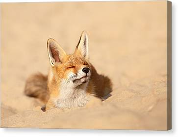 Zen Fox Series - Sandy Paws Canvas Print