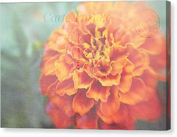 Canvas Print featuring the photograph Send With Love by Diane Alexander