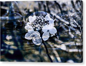 Send You Some Feeling Of Blue Canvas Print by Nicole Frischlich