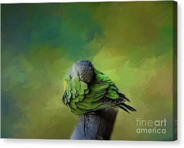 Senegal Parrot Canvas Print