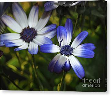 Senetti On A Warm Spring Day Canvas Print by Dorothy Lee