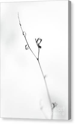 Sensitive Canvas Print by Gabriela Insuratelu