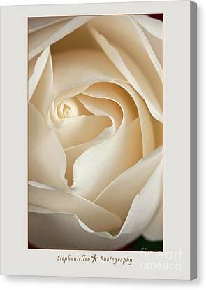 Sensual White Rose Canvas Print