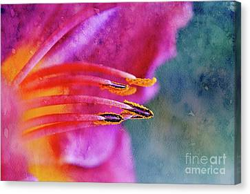 Fushia Canvas Print - Sensuality - V08a by Variance Collections