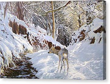 Sentier Des Biches Canvas Print by Julian Wheat