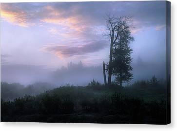 Canvas Print featuring the photograph Sentinels In The Valley by Dan Jurak