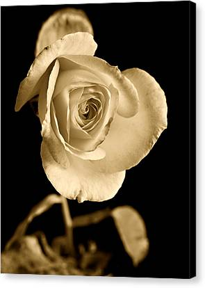 Sepia Antique Rose Canvas Print by M K  Miller