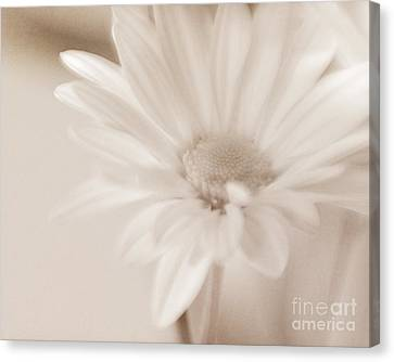 Sepia Daisy Canvas Print by Lisa McStamp