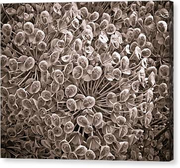 Sepia Nature Pattern Canvas Print by Frank Tschakert