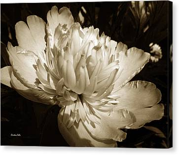 Earth Tones Canvas Print - Sepia Peony Flower Art by Christina Rollo