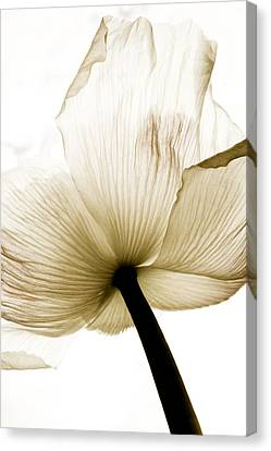 Sepia Poppy Flower Canvas Print by Frank Tschakert