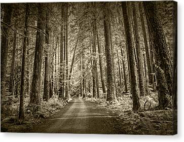 Sepia Tone Of A Road In A Rain Forest Canvas Print by Randall Nyhof
