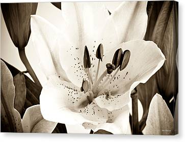 Sepia Toned Asian Lily Canvas Print