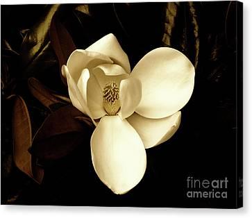 Sepia-toned Magnolia Canvas Print