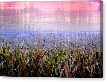 September Cornfield Canvas Print by Bill Cannon