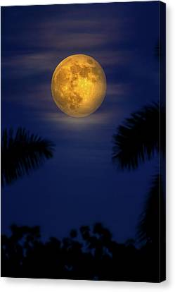 Glowing Moon Canvas Print - September Supermoon by Mark Andrew Thomas