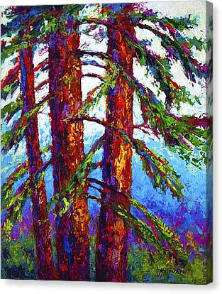 Sequoia Canvas Print by Marion Rose