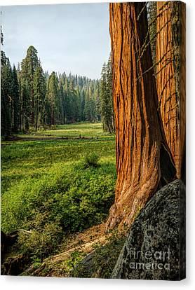 Sequoia Np Crescent Meadows Canvas Print