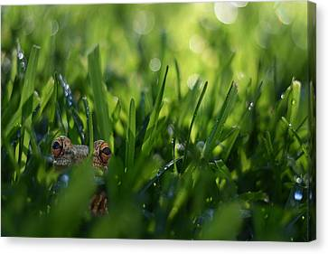 Canvas Print featuring the photograph Serendipity by Laura Fasulo
