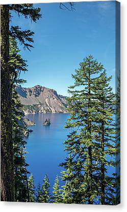 Serene Pines Canvas Print
