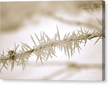 Serene Winter Frost Canvas Print
