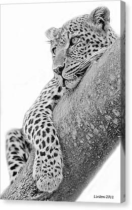 Leopard Canvas Print - Serengeti Leopard by Larry Linton