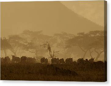 Serengeti Monsoon Canvas Print by Joseph G Holland
