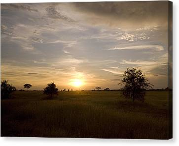 Serengeti Sunset Canvas Print by Patrick Kain