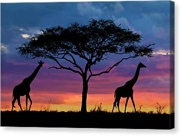 Serengeti Sunset Canvas Print by Stu  Porter