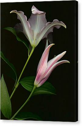 Canvas Print featuring the photograph Serenity by Carol Kinkead