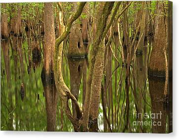 Serenity In The Cypress Canvas Print