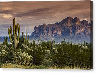 Serenity Of The Sonoran  Canvas Print
