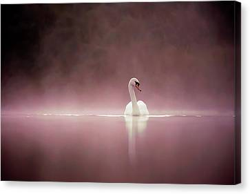 Swans... Canvas Print - Serenity - Swan On A Foggy Sunset by Roeselien Raimond
