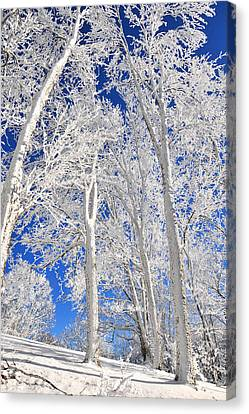 Serious Rime Frost Canvas Print by Alan Lenk