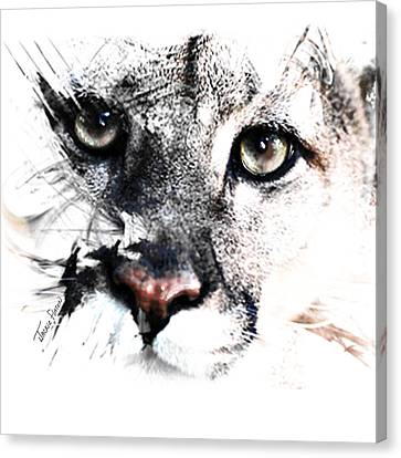 Seriously Cougar Canvas Print by Jackie Flaten