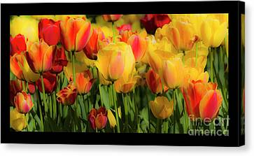 Canvas Print featuring the photograph Seriously Spring - Bordered by Wendy Wilton