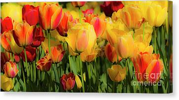Canvas Print featuring the photograph Seriously Spring by Wendy Wilton