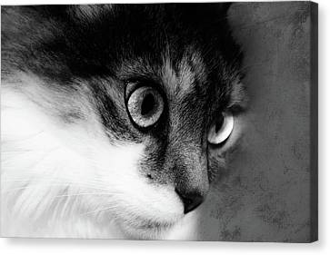 Seriously You Have Issues Black And White Cat Art Canvas Print by Georgiana Romanovna
