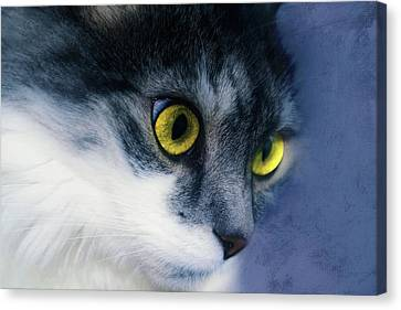 Seriously You Have Issues Cat Art Canvas Print by Georgiana Romanovna