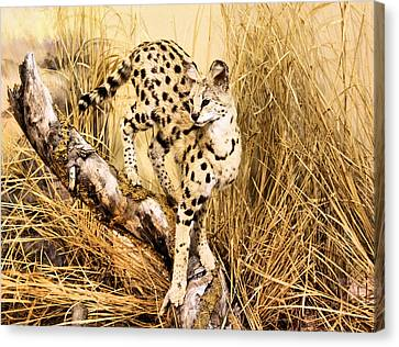 Serval Canvas Print