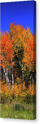 Set 54 - Image 2 Of 5 - 10 Inch W Canvas Print by Shane Bechler