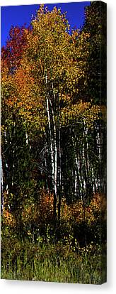 Set 54 - Image 5 Of 5 - 10 Inch W Canvas Print by Shane Bechler