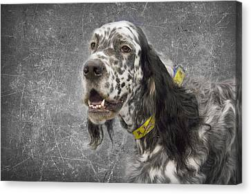 Setter 1 Canvas Print by Rebecca Cozart