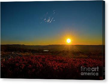 Setting Sun At Dolly Sods Canvas Print by Dan Friend