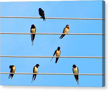 Canvas Print featuring the photograph Seven Swallows by Ana Maria Edulescu