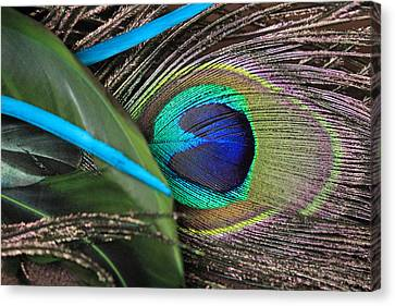 Several Feathers Canvas Print