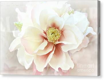 Shabby Chic White Dreamy Pastel Magnolia Blossom - Dreamy Magnolia Floral Decor Canvas Print by Kathy Fornal