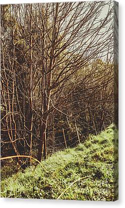 Shabby Leafless Trees Canvas Print by Jorgo Photography - Wall Art Gallery