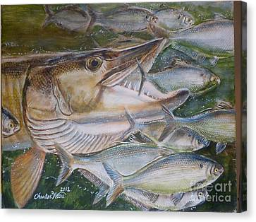 Shad Attack Canvas Print by Charles Weiss