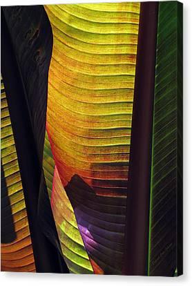 Shade Canvas Print by Deborah  Crew-Johnson